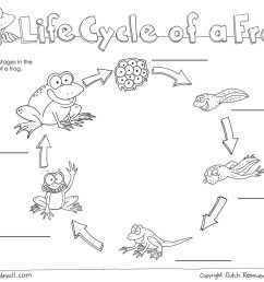 Life Cycle Worksheets - Butterfly Life Cycle sq [ 927 x 1200 Pixel ]