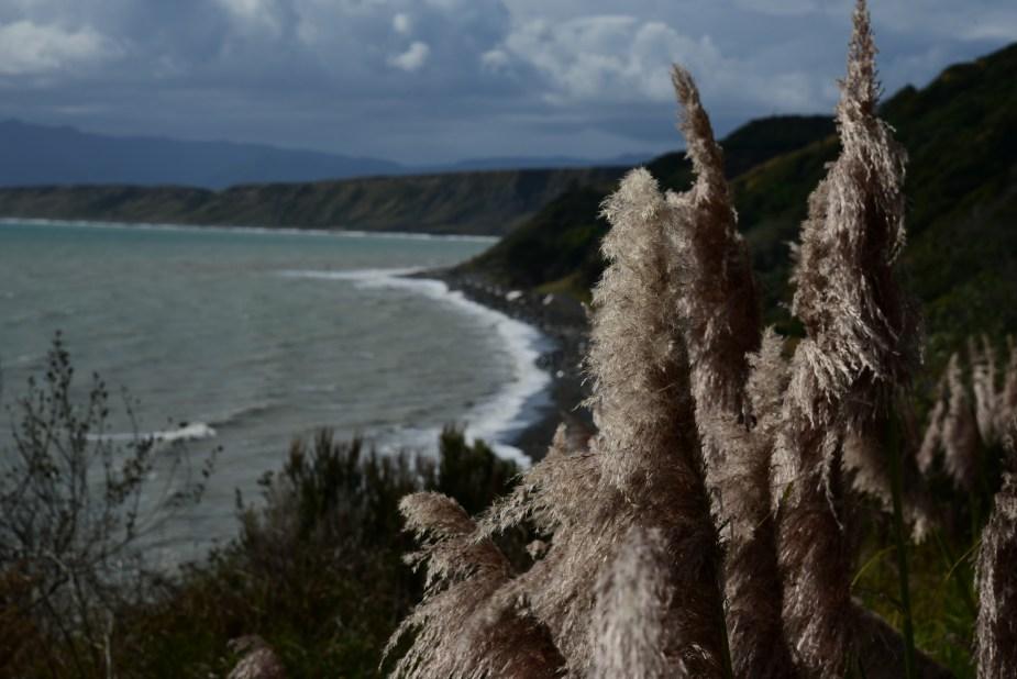 New Zealand Coast, beaches in New Zealand, move to New Zealand, image by Jade Jackson