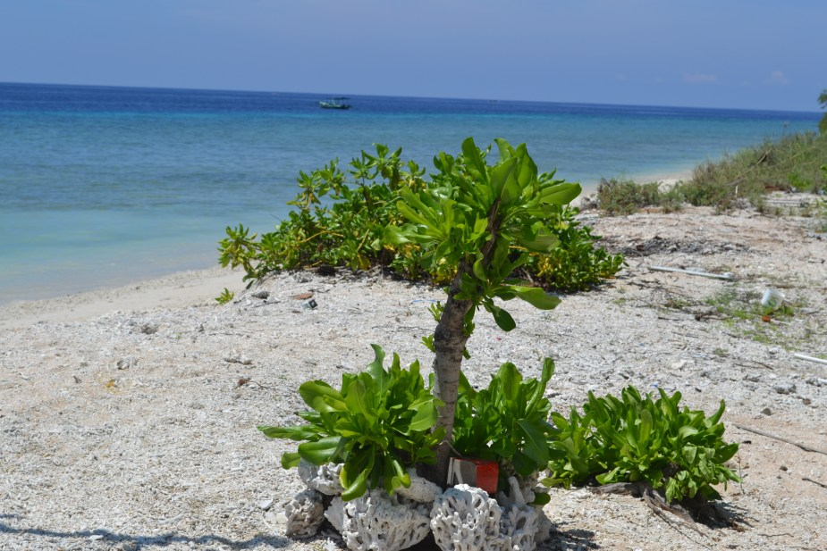 Gilli Air, Gilli Islands, Lombok, things to do in Lombok for 3 days, snorkelling, Lombok beach, holiday things to do Lombok, image by Jade Jackson