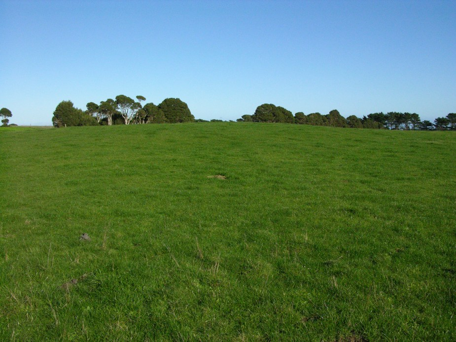 green grass on King Island, Tasmania, image by Jade Jackson