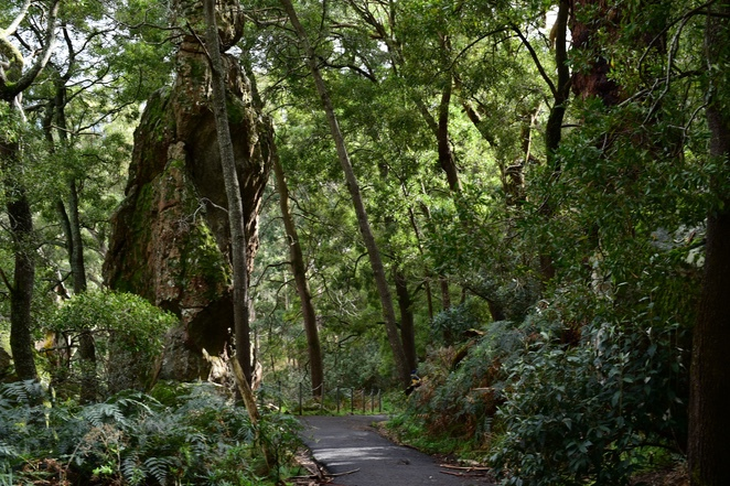 pathway up Hanging rock, Hanging Rock Victoria, bush walks, near Melbourne, Melbourne weekend escapes, image by Jade Jackson