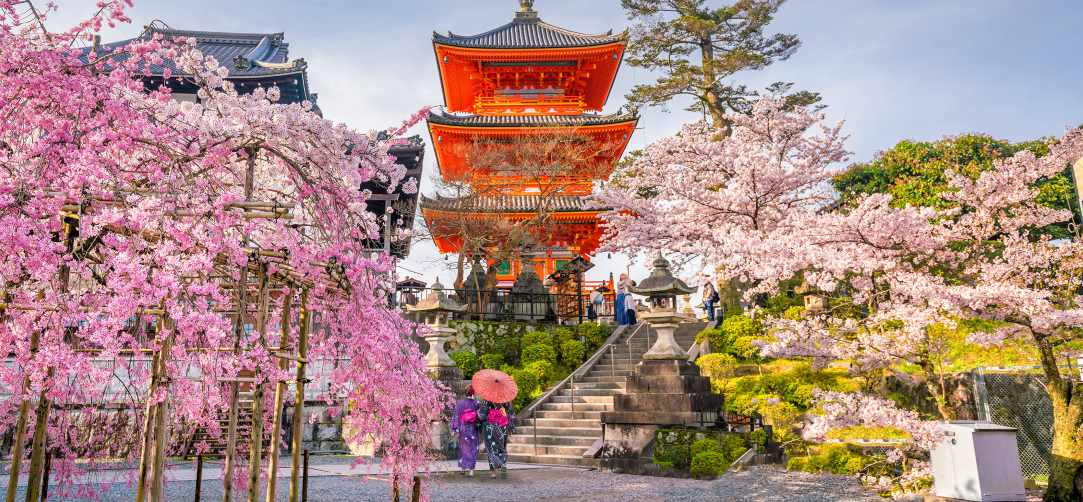cheap flights activities Japan