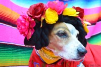 Frida Kahlo Dog Costume -DIY - Halloween Dog Costume