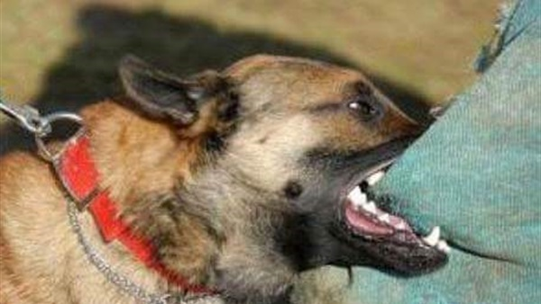عضَّةُ كلْبٍ شرسٍ تُنهي حياة طفلة بالنواصر