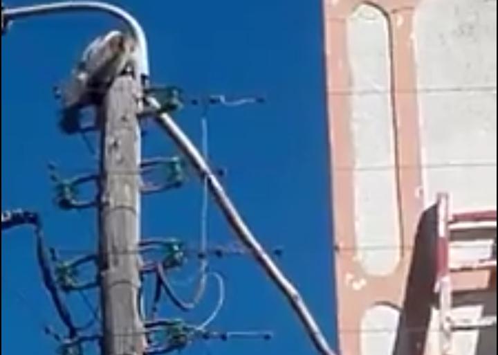 """شاهد بالفيديو…شبان بخريبكة ينقذون """"قطا"""" علق بأسلاك كهربائية"""