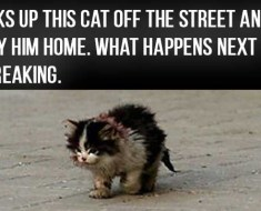 Everyone Was Warned Not To Touch This Cat, But This Guy Did. This Is Heartbreaking.