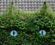 Woman turns garden hedge into giant cat – complete with whiskers and eyes