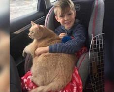 Maman dit à un garçon qu'il peut choisir n'importe quel animal à l'abri. Il a choisi ce chat âgé, en surpoids et timide