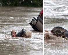 Man Keeps His Cat With Him While Swimming To Safety in Flood Waters