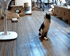 Ils installent une caméra cachée, afin de filmer ce que fait leur chat paralysé lorsqu'ils rentrent à la maison