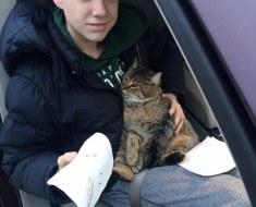 Un chat est jeté sur l'autoroute par la fenêtre d'une voiture. Un adolescent de 14 ans se précipite alors pour sauver la vie de l'animal.