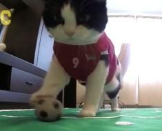 Ce chat s'entraîne dur pour la Coupe de monde de football et il est plutôt doué