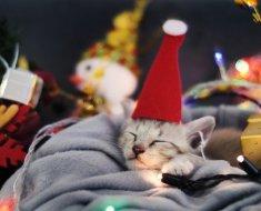 6 cadeaux de vacances étonnants pour les nouveaux parents de chat