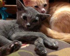 Ce chaton différent des autres a trouvé une famille idéale qui prend soin de lui