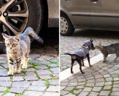 Un chaton errant s'approche d'un petit chien pour lui demander de l'aide