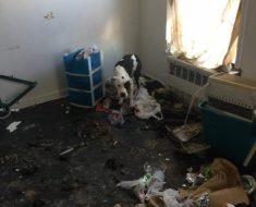 Prisonniers d'un appartement, ce chat et ce chien vivaient parmi les immondices!