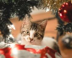 Une chatte dépose un cadeau très précieux sous le sapin de Noël de sa famille adoptive.