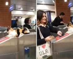 Cette chatte errante accueille des centaines de voyageurs chaque jour