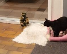 Le chat de la femme adore rester devant l'hôpital – il reçoit un beau cadeau pour son bon travail