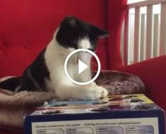 Ce chat a trouvé un jeu très amusant avec son maître et il s'éclate comme un fou