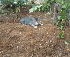 Ce chat avec un cœur brisé refuse de quitter la tombe de son propriétaire