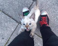 Un homme filme le moment où une petite chatte errante décide qu'il sera son maître pour toujours