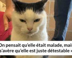 Un refuge pour animaux a mis « la pire chatte du monde » en adoption et les gens adorent sa description