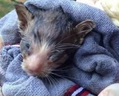 Ils trouvent ce minuscule chaton abandonné près d'une poubelle. Puis le verdict du vétérinaire va surprendre tout le monde