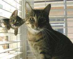 Ces bébés chats posent à côté de leur maman et c'est adorable !