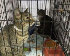 La police de l'Indiana permet aux gens de payer leurs contraventions de stationnement en faisant don de nourriture pour chats