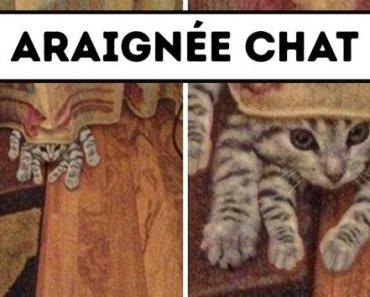 18 Photos qui prouvent que les chats ne se lassent jamais d'entourlouper les humains