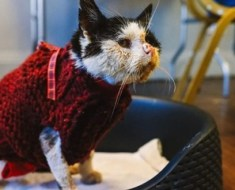 Ce chat qui n'avait plus que quelques heures à vivre a fait quelque chose qui a bouleversé le vétérinaire