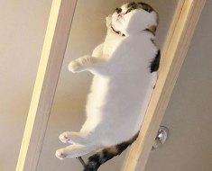 25 raisons hilarantes qui montrent pourquoi les propriétaires de chats devraient avoir une table en verre