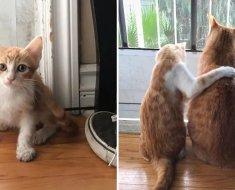 Ce chaton errant est venu demander de l'aide à un couple et leur chat l'a pris sous son aile