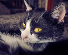 10 signes de souffrance chez le chat