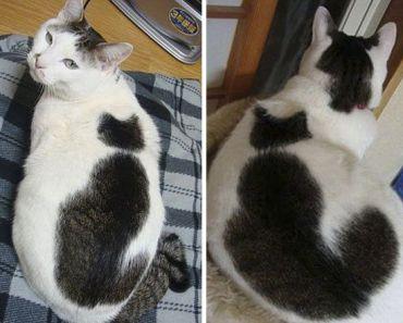 30 chats qui possèdent un pelage vraiment singulier