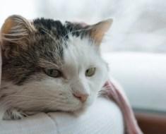 Savoir reconnaître la douleur chez le chat , vous le savez , vous ?