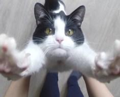 Les chats voient les humains comme leurs parents