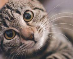 Votre chat vous aime même s'il ne le montre pas, c'est pourquoi