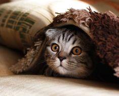 Comment profiter des chats quand on est allergique ?