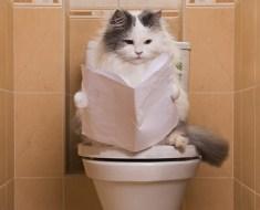 Pourquoi le chat enterre-t-il ces déjections ?