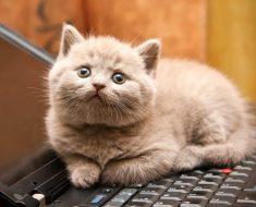 Décodez le comportement de votre chat: 14 choses qu'il essaie de vous dire