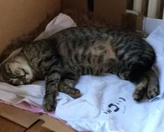 Naissance de chatons : la mise bas de la chatte ? Que faut-il faire ?