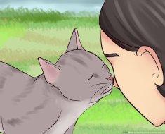 9 Signes que votre chat vous aime vraiment