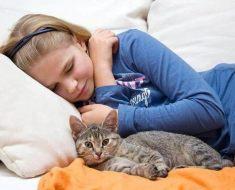 Pourquoi les chats aiment dormir avec nous ?