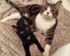 Cette petite chatte errante a trouvé le meilleur des grands frères qui prend soin d'elle