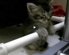 Vous allez rire en voyant la façon dont ce chaton lutte pour ne pas s'endormir