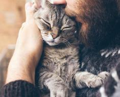 10 raisons pour lesquelles être un «fou personne à chat» est une bonne chose