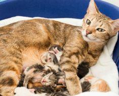 Un chat errant enceinte trouve un endroit sûr pour donner naissance – juste à temps!