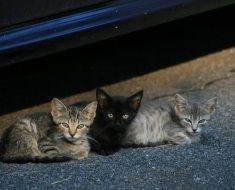 5 choses à faire si vous trouvez des chatons errants